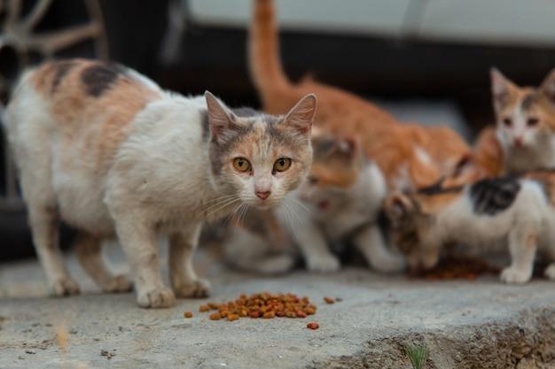 Dakloze kat met kittens die speciaal kattenvoer op straat eten