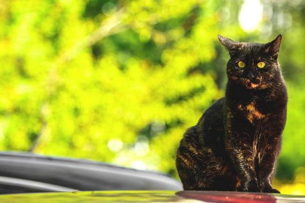 Dakloze kat zittend op een rood dak van de auto, zwerfdieren onder ons concept foto