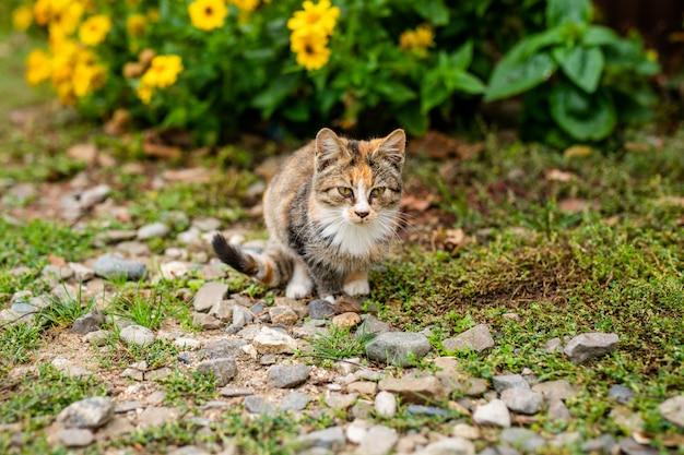 Dakloze kat zonder ras in schuilplaats voor een wandeling op straat