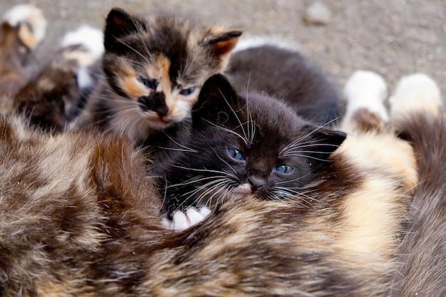 Dakloze moeder kat met twee kleine katjes.