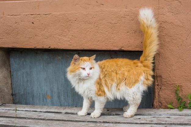 Dakloze rode kat woont in de kelder van een oud huis met meerdere verdiepingen.