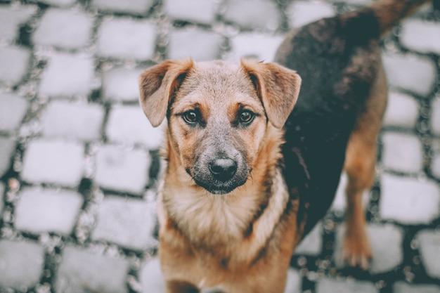 Dakloze schattige bruine hond