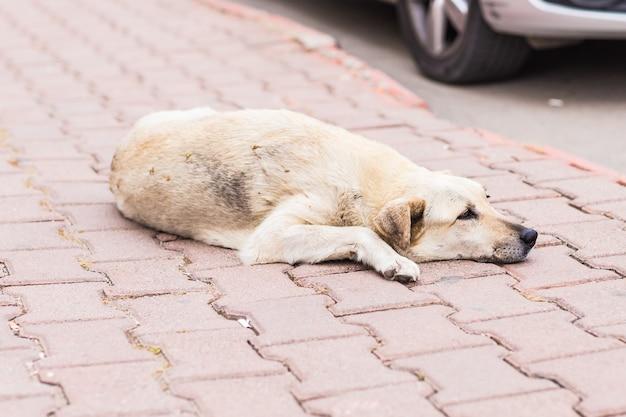 Dakloze trieste hond