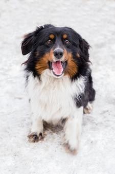 Dakloze, vriendelijke hond op straat, in de winter