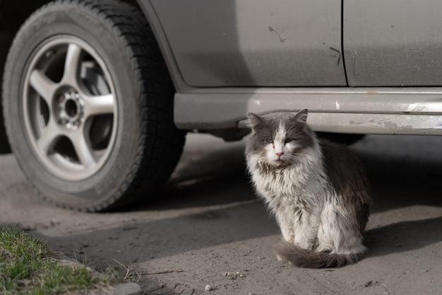 Dakloze vuile kat, zittend op de weg