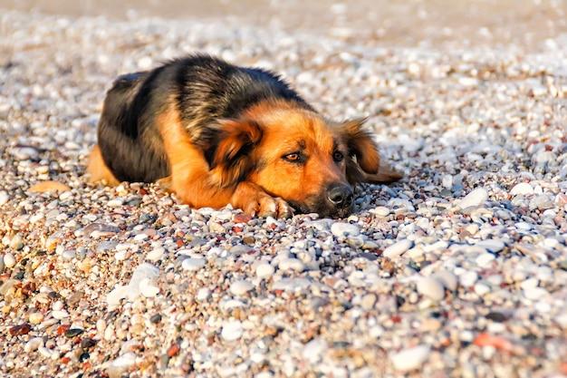 Daklozen trieste hond liggend op het stenen strand