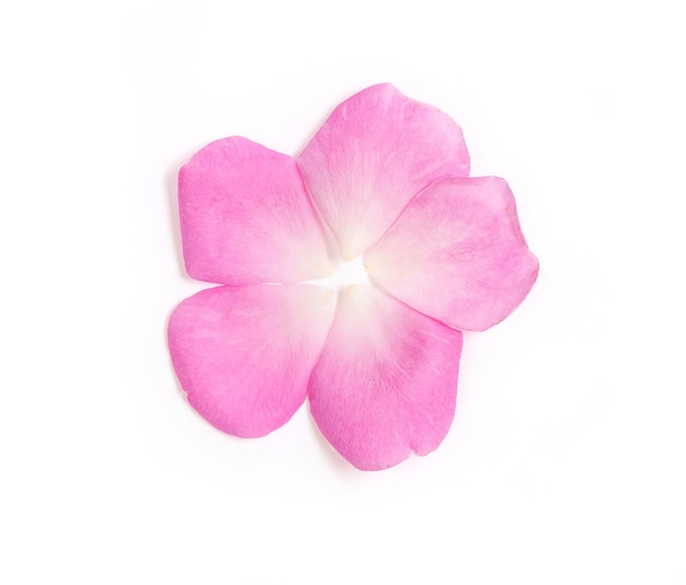 Damast roos, roze bloemblaadje geplaatst geïsoleerd op wit
