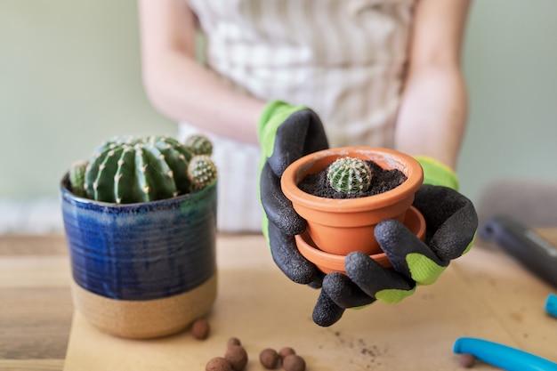 Dames handen in handschoenen aanplant van jonge cactus plant in pot. hobby's, vrije tijd, kamerplanten, tuinieren, potvriendenconcept