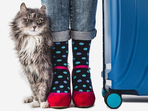 Damesbenen, trendy schoenen en vrolijke sokken.