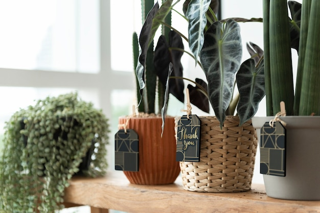 Dank u etiketten op planten in een bloemist winkel
