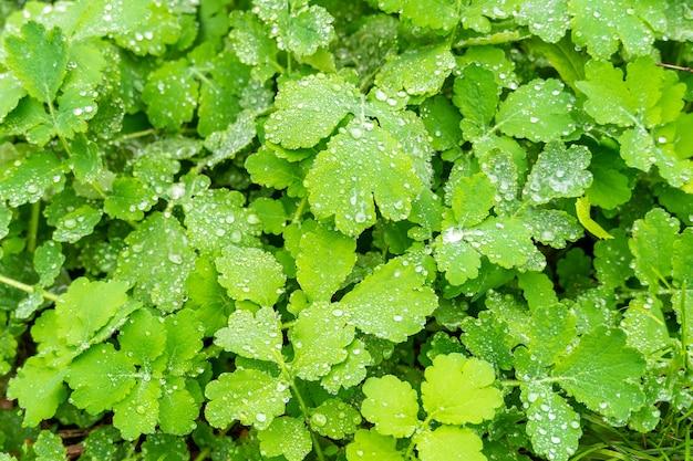 Dauw druppels op sappig groen gras close-up. regendruppels weide, natuurscène. ecologie, dag van de aarde, concept van schoon waterbehoud