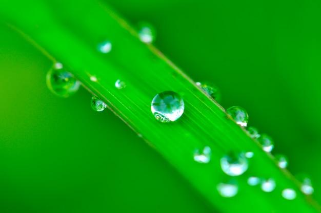 Dauw op groen gras