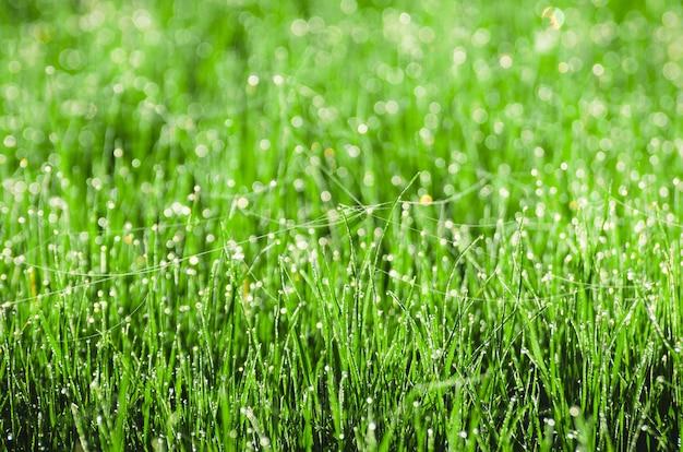 Dauw op het gras met spinnenweb