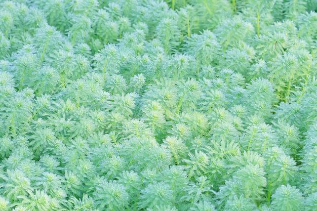 Dauw op waterplanten in de ochtend