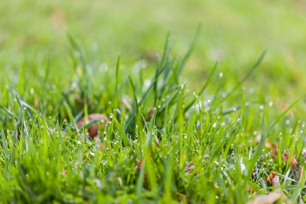 Dauwdalingen op heldergroen gras in de de lenteochtend