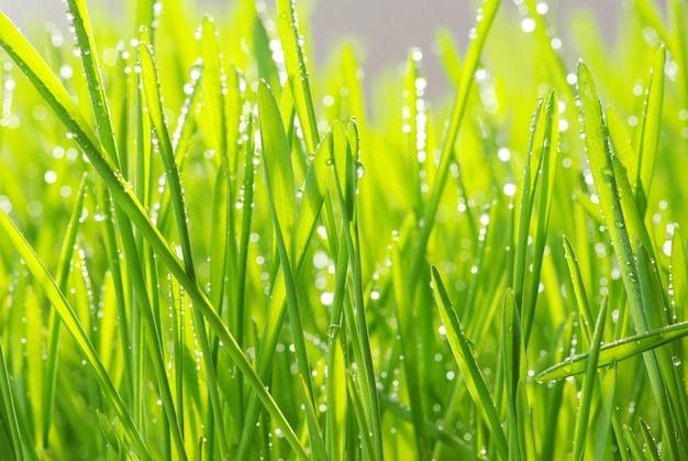 Dauwdruppel op een grassprietje