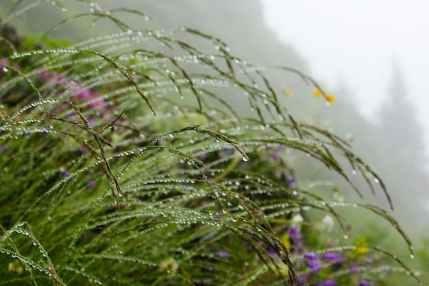 Dauwdruppels op de bloemen en planten, regenachtige dag, macro- en close-upfoto, natuuroppervlak.