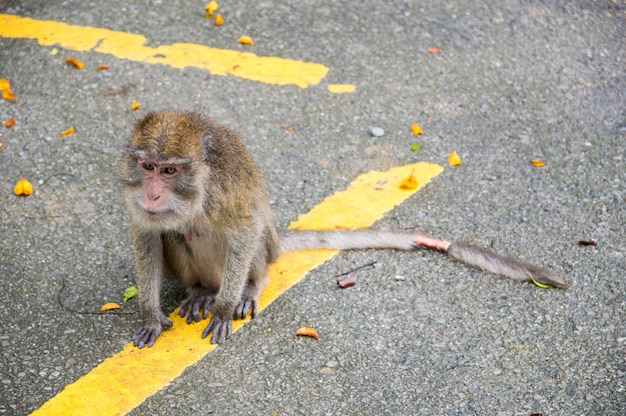 De aap heeft een wond aan de staart.