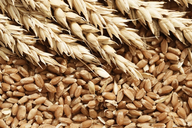 De aar van tarwe en rijpe zaden sluit omhoog. rijk oogst creatief concept.