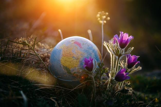 De aardebol in het gras naast mooie purpere bloemen sluit omhoog. ontwaken van de planeet en de eerste lentebloemen.