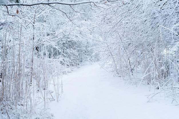 De abstracte sneeuw winter bos koud vriesweer. bomen onder de sneeuw