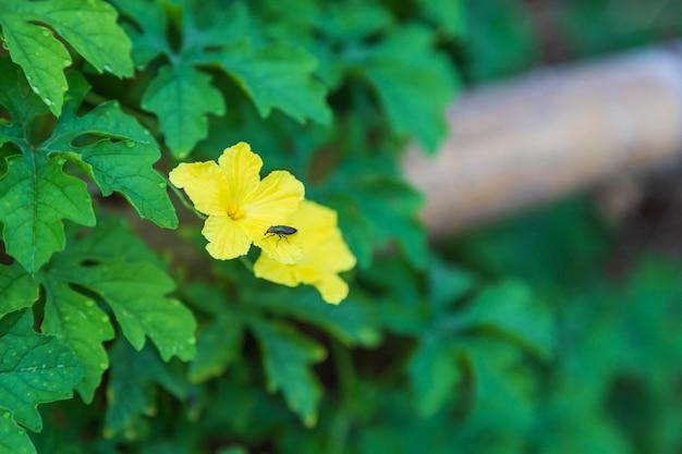 De achtergrond van de bloemen steeg op een houten hek