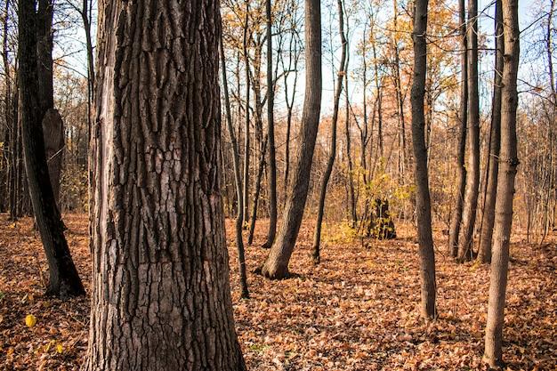 De achtergrond van de bosbladerentextuur de achtergrondherfst