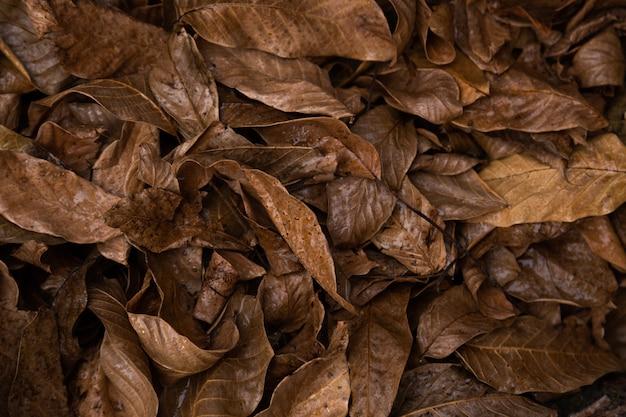 De achtergrond van het de herfstpatroon en textuur van bruine rotte bladeren die op de grond liggen.