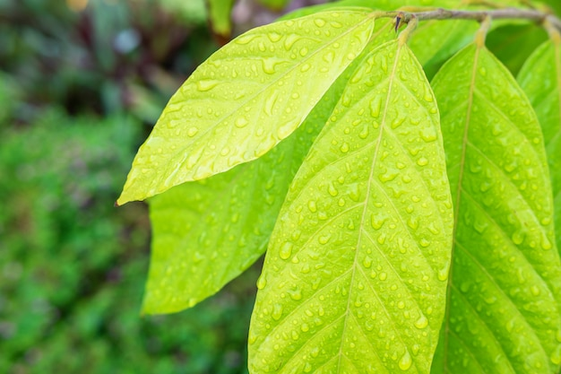 De achtergrond van regendruppels op bladeren