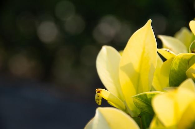 De achtergrond vertroebelde groen blad in tuin.