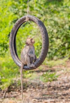 De activiteiten van de kleine apen op een zonnige dag Premium Foto