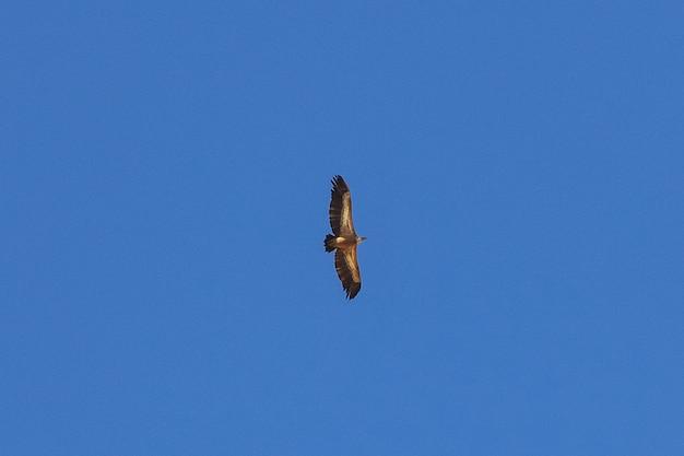 De adelaar in de lucht in bergen, jemen