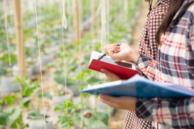 De agronoom onderzoekt de groeiende meloenzaailingen op de boerderij, boeren en onderzoekers in de analyse van de plant.