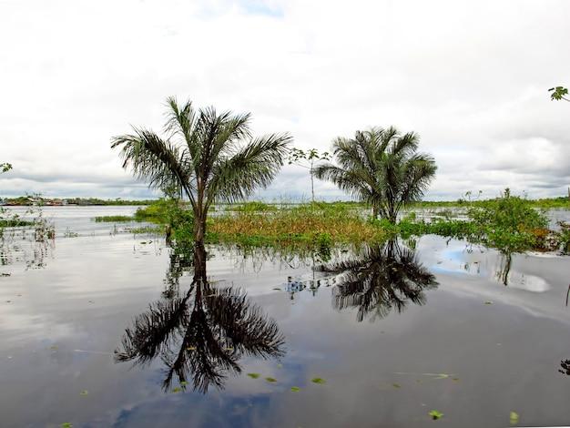 De amazone-rivier in peru en brazilië, zuid-amerika