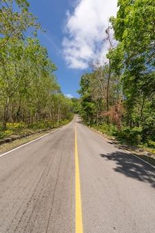 De asfaltweg door de plantage van rubberbomen in de zomer mooie blauwe hemelachtergrond in phuket thailand.