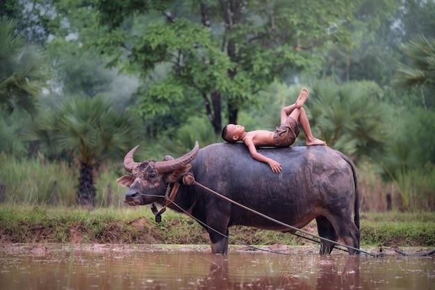 De aziatische jongen van het land ligt op de buffel bij het padieveld