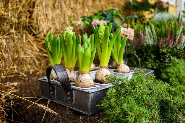 De balie van de bloemenwinkel. huisplanten in potten. porvoo, finland