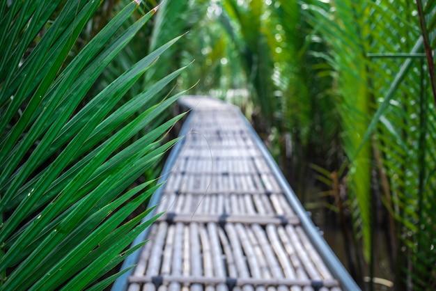 De bamboeweg in mangrovebos