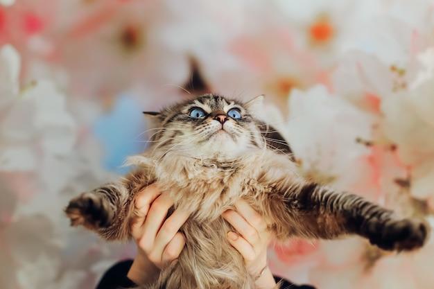 De bange kat strekt de benen naar voren. het meisje houdt kat voor zich vast