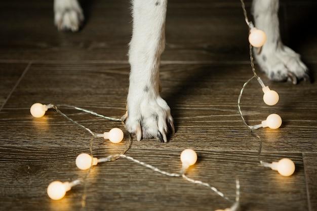 De benen van de close-uphond met kerstmislichten