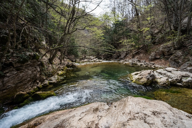De bergrivier mondt uit in een bosmeer tussen bomen en grote stenen. dicht groen bos. prachtige natuur.