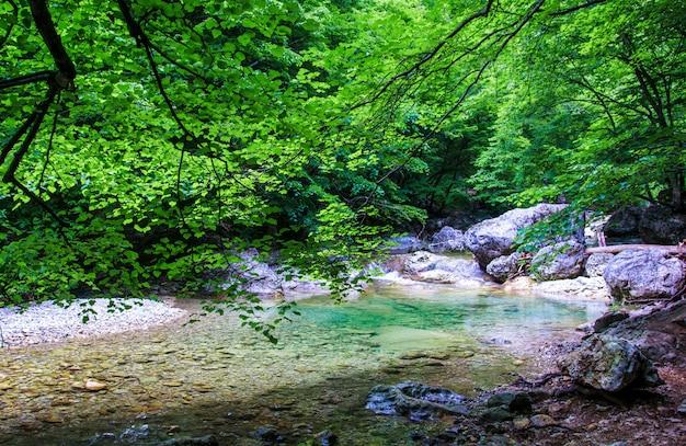 De bergrivieren van het landschap in het bos