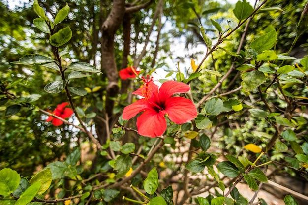 De beroemde botanische tuin in funchal, het eiland madeira, portugal