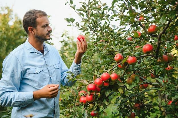 De beste appels kiezen. gelukkige jonge boer die zijn hand uitstrekt naar rijpe appel en glimlacht terwijl hij in de tuin staat