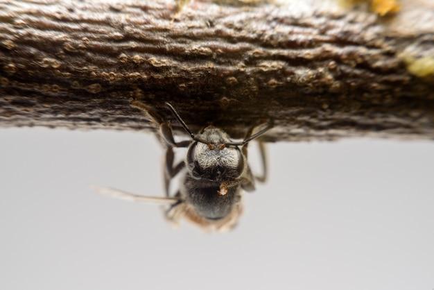 De bij beklimt op tak dichtbij honingraat