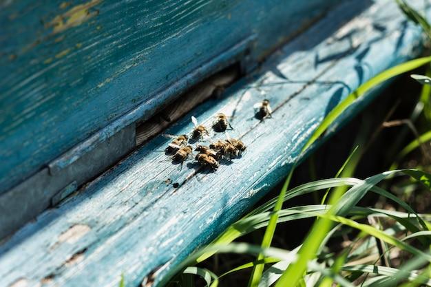 De bijenkorfzitting van de close-upbijen op houten bijenkorf