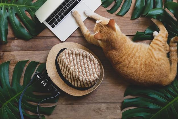 De binnenlandse gemberkat gedraagt zich als mens die aan laptop computer op rustieke houten grungeachtergrond werken met tropische bladeren monstera, hoed en retro stijlcamera