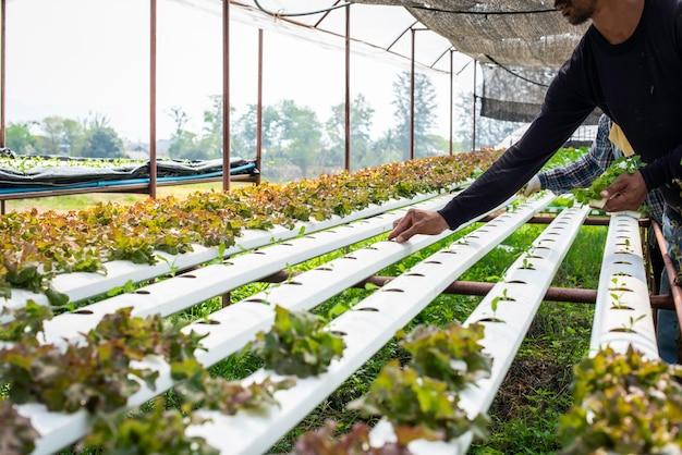 De biologische hydrocultuur groenteteelt boerderij op het platteland.