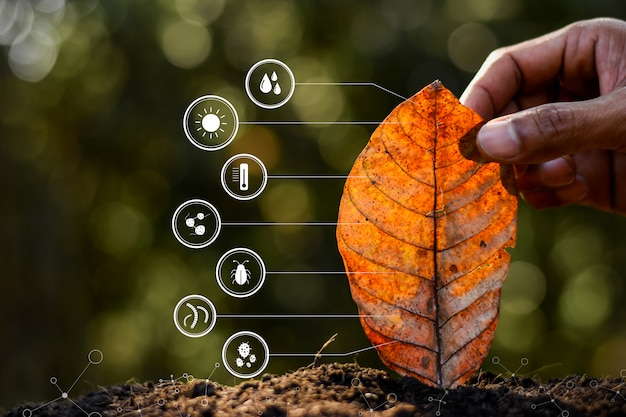 De bladeren in de handen van mannen en technologiepictogram over degradatie in de bodem.