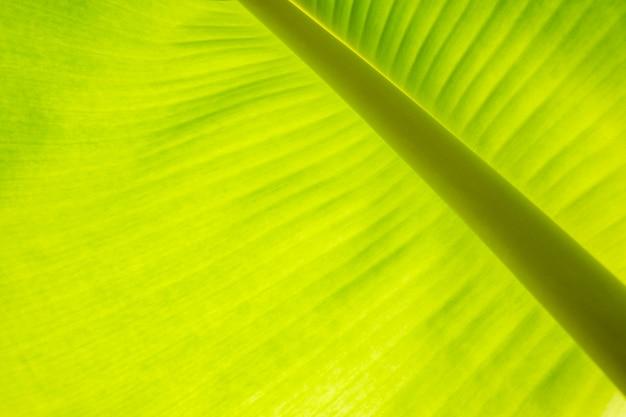 De bladeren van de bananenboom groene gestructureerde abstracte achtergrond.
